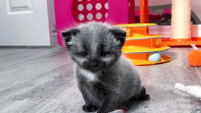 The cat born with fur survived