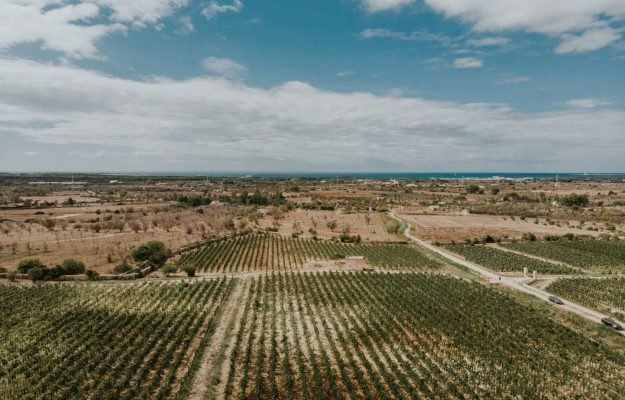 """In Salento, """"The Economy of Wine Sharing"""" by Tenuta Liliana: Vineyards and Shared Distribution"""