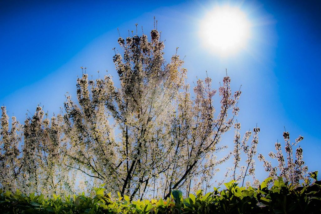 """""""In the spring, low vitamin D is used to arm the defenses."""""""