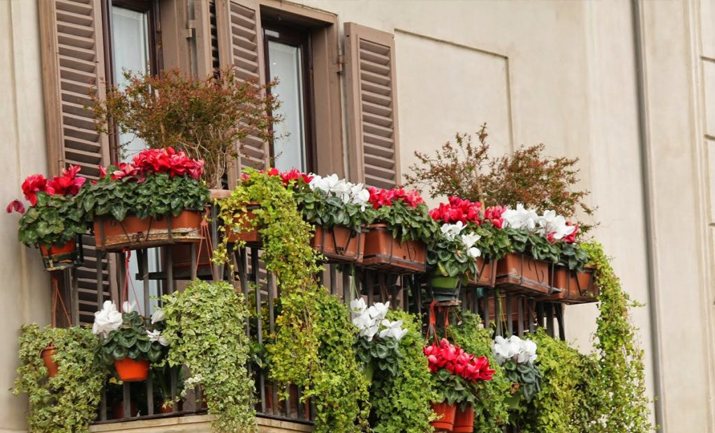 5 amazing and easy-to-grow plants that will make our balcony a true fairytale garden