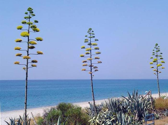 """More blue flags this year, at 416 """"best"""" beaches - Green Living"""