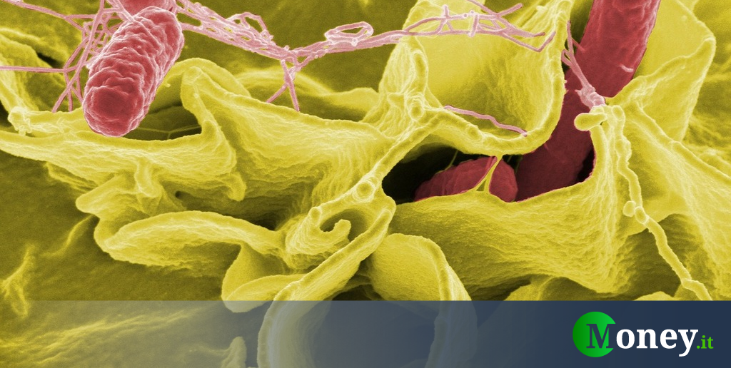 Salmonella Warning in the United States: Dangers to Humans