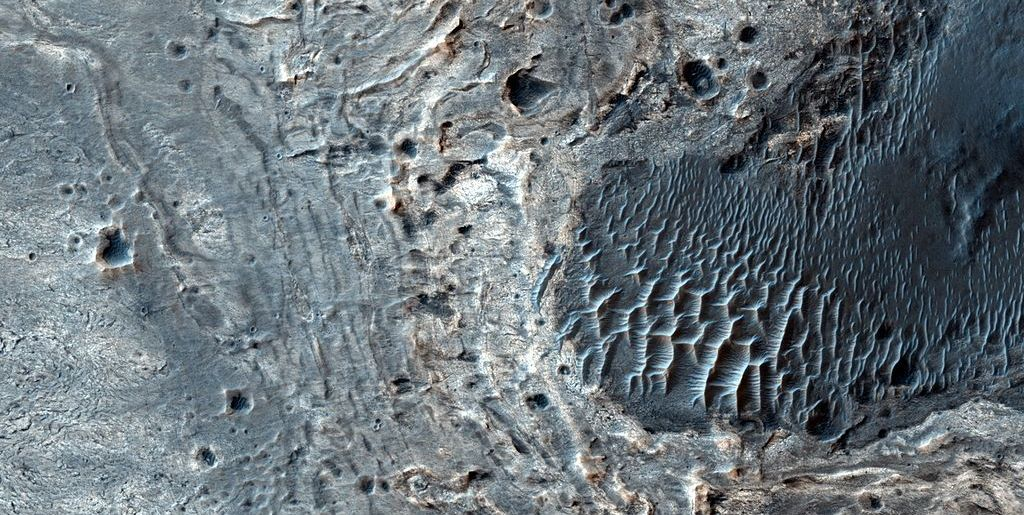 We might have found mushrooms on Mars, and that would be an incredible discovery