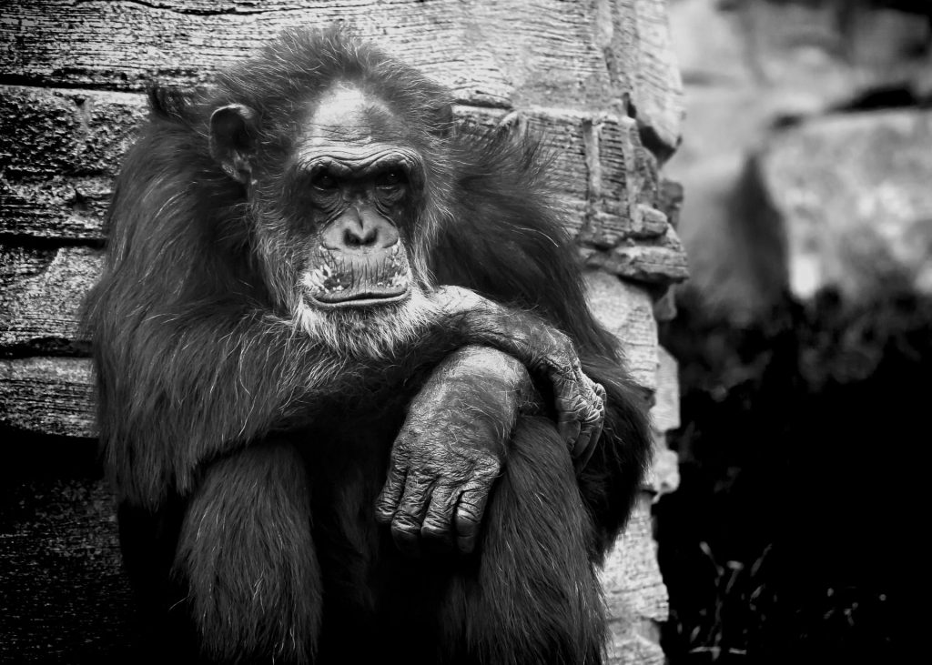 One of the most terrible animal experiments in history