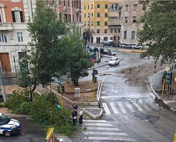 Fallen trees (2) -2-3