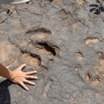 Finding footprints that rewrite history – Libero Quotidiano