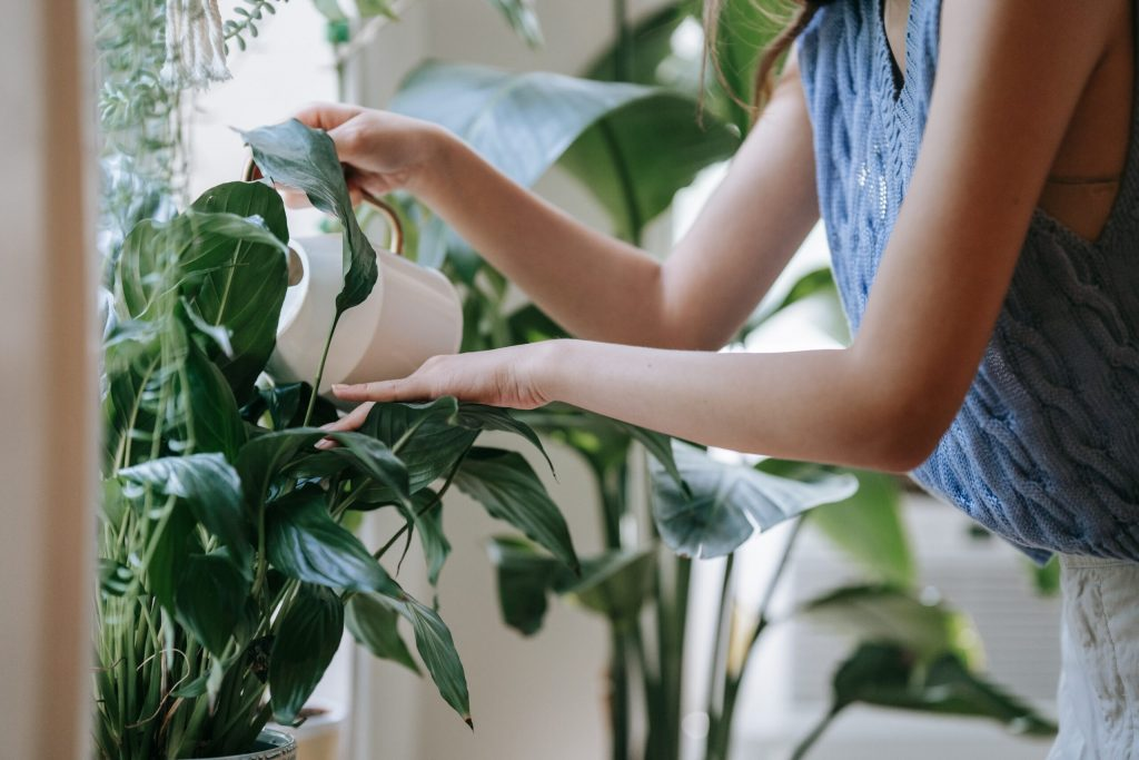 A few simple steps to get your house plants healthy even in winter