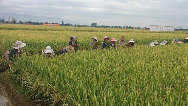 China Rice Exports to US - Riso Italiano