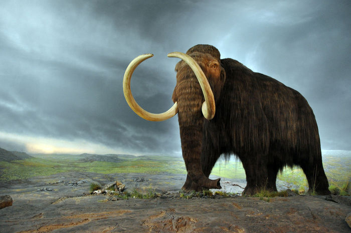 From US$15 million to revive the mammoth - Biotech
