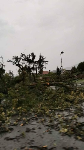 Hurricane in Masa Carra, uprooted trees and fear: Lots of damage