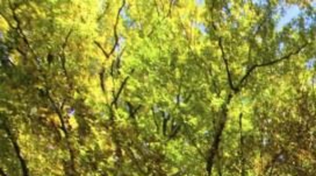 Trees increased by 587 thousand hectares through 290 million tons of Co2