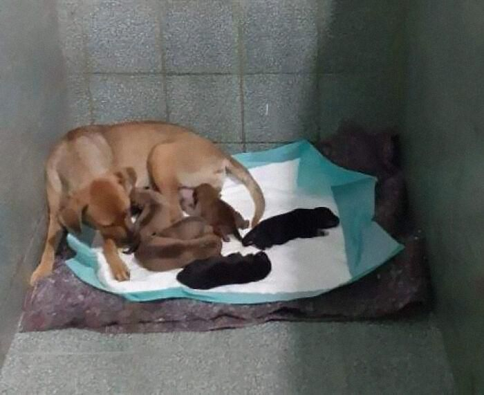 A dog waits outside a veterinary clinic while a mother gives birth to her young