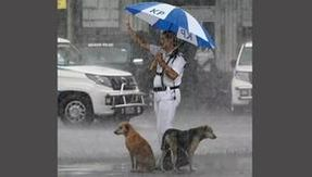 The passionate photo of a police officer sheltering two dogs under his canopy